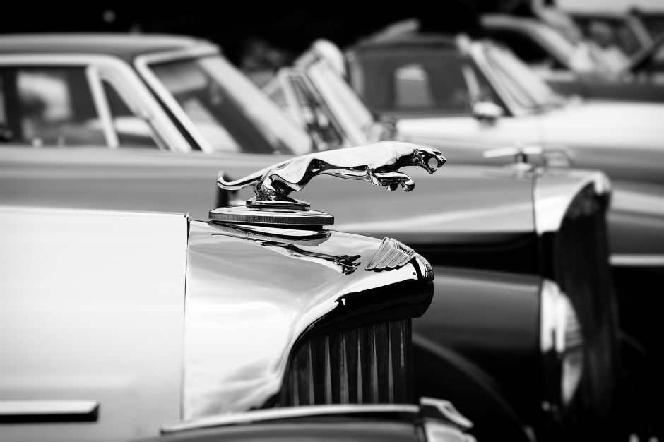 Classic Jaguar Photography
